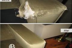 Animal-dog-damage-upholstery-furniture
